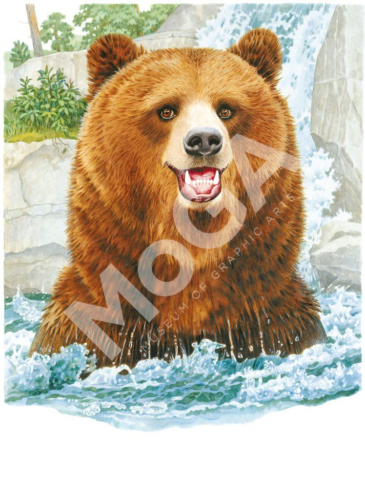 Björnar och kartor för Skansen